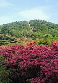 小室山山頂フリマ5日目
